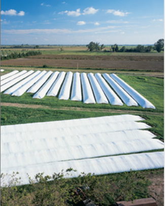 Plastar Grain bags in field